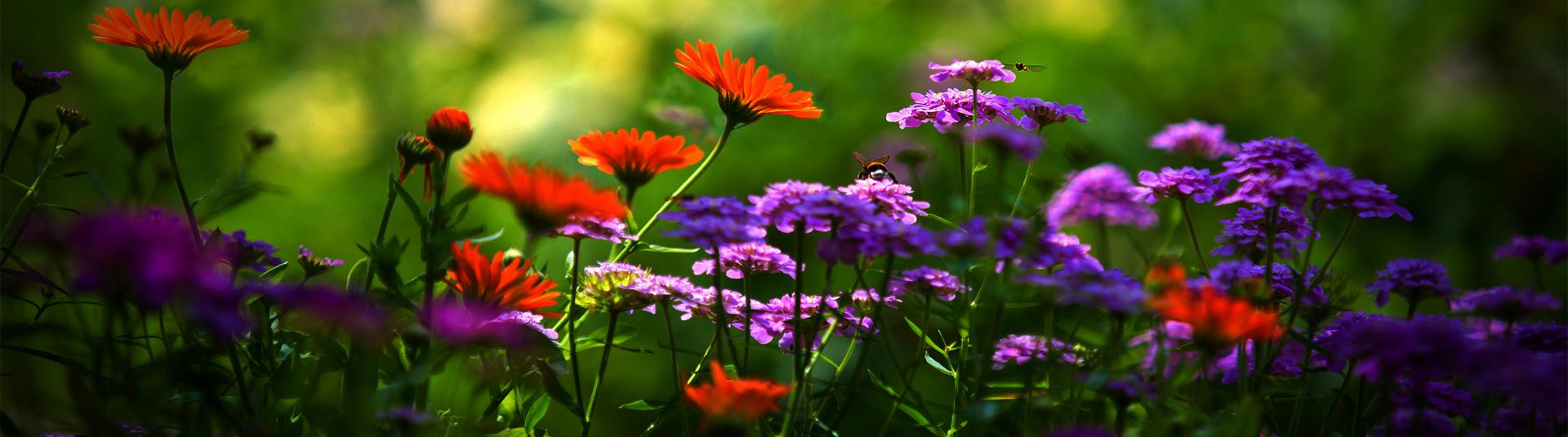 Jardins Acúrcio